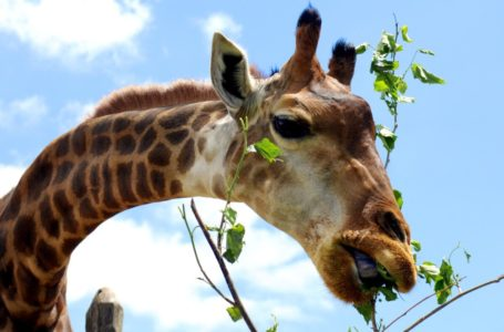 Visitas guiadas voltam ao Zoo de Brasília